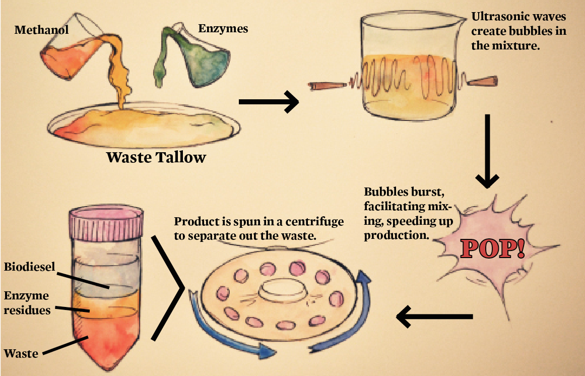 Peter Adewale's method produces biodiesel from waste tallow in 20 minutes.
